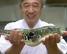 Puffer-fish-for-dinner
