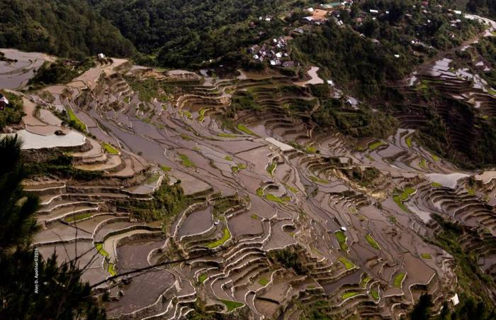 maligcong-rice-terraces