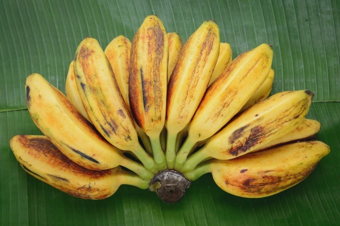Saba-Banana-or-Cardava-Banana